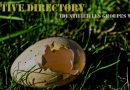 Active Directory : comment identifier les groupes vides ?